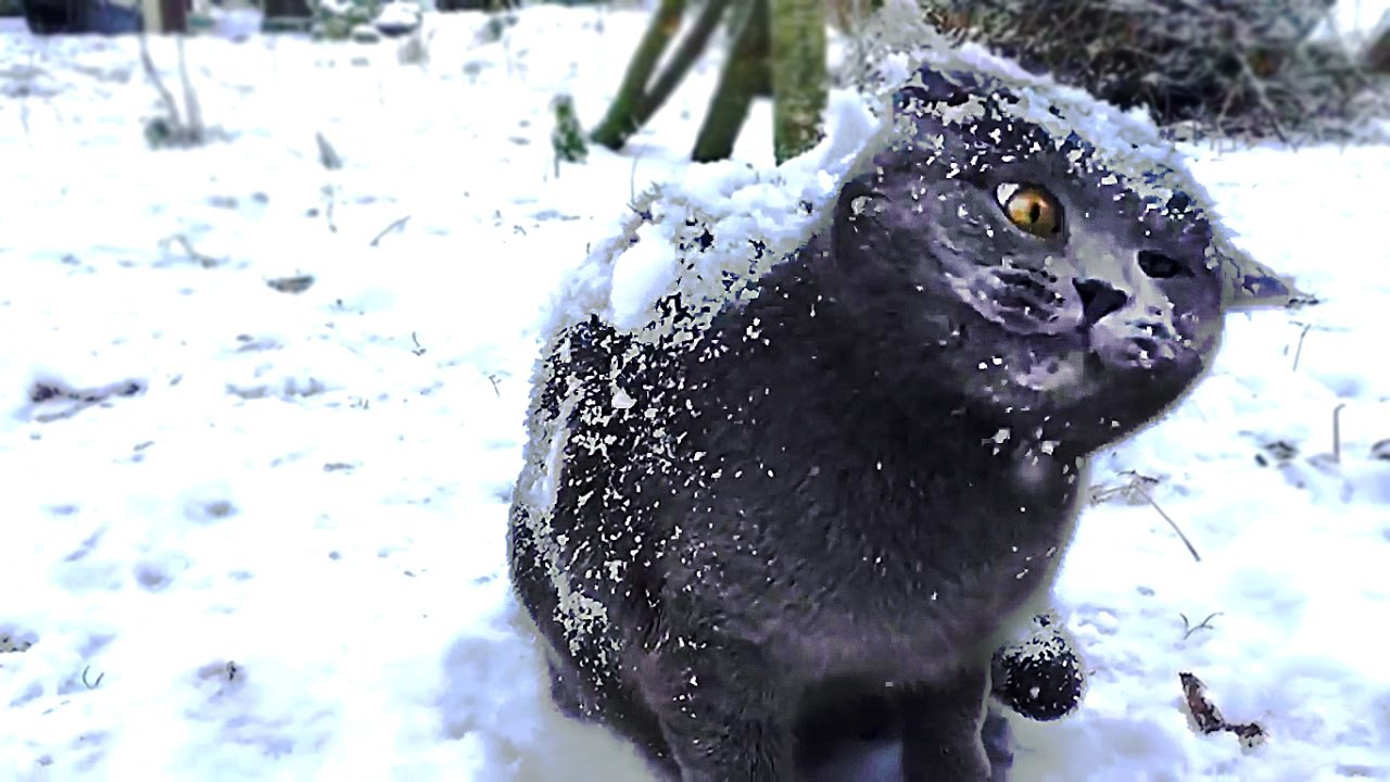 Post pictures / .GIFs of cats in the snow. | IGN Boards |Cat Snow Flakes