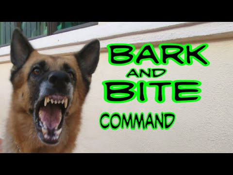 Training German Shepherd Dog Bark And Basic Bite Command