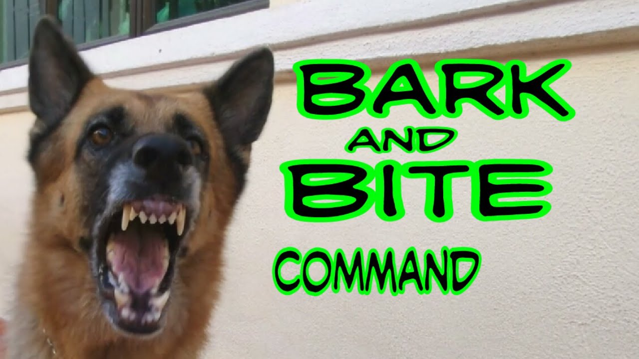 Training German Shepherd Dog Bark And Basic Bite Command - YouTube | Training Dog To Not Bark