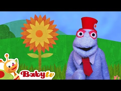 Yellow Flower with a Bee and a Rainbow full of Colors!   BabyTV