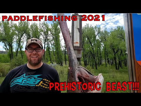 Dino Might   Paddlefishing on the Missouri River in Montana   2021