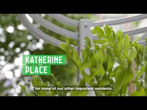 Green Your Laneway project tour | City of Melbourne