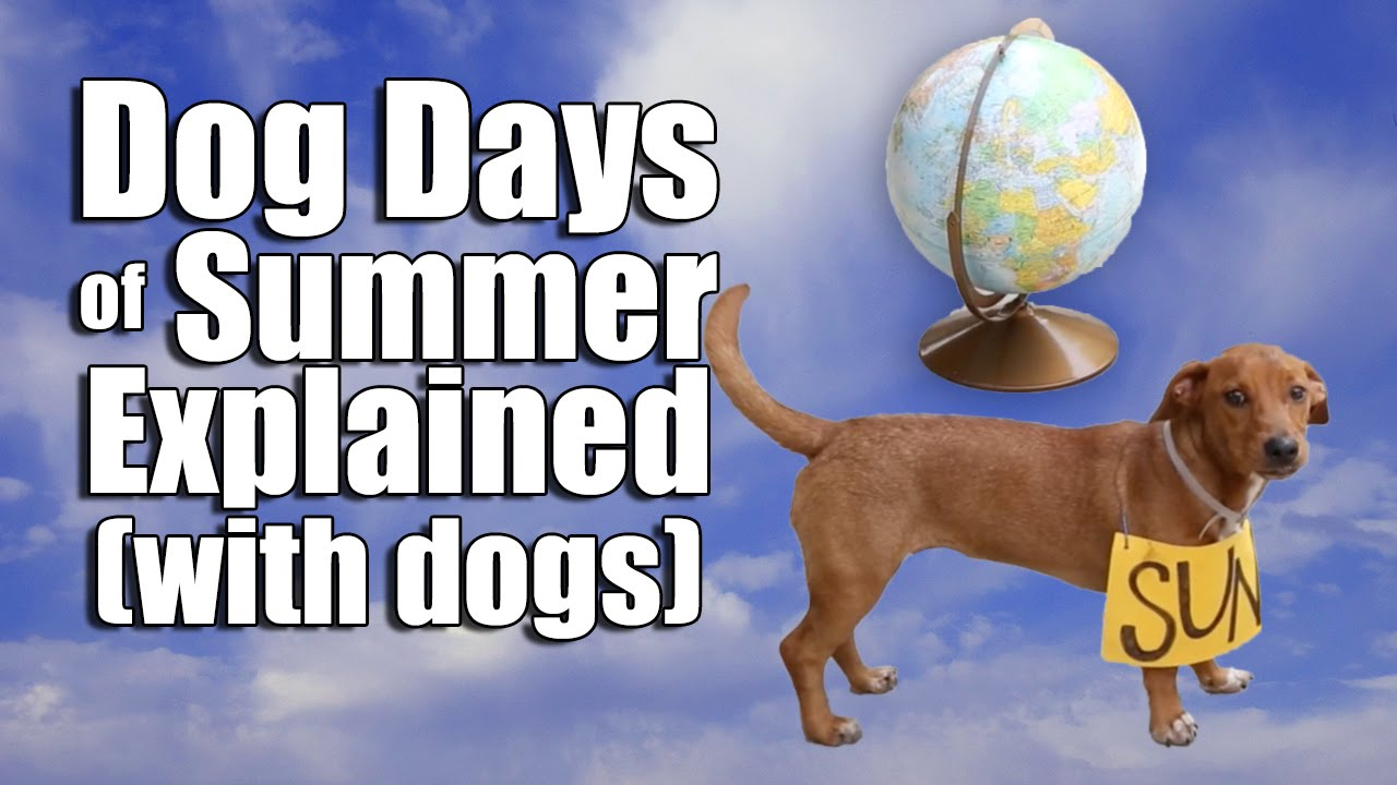 The Dog Days of Summer