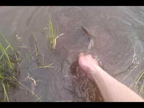 рыбалка на сиверсовом канале