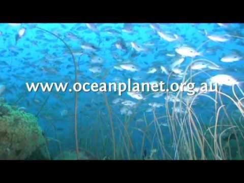 Tasmania's Unique Marine Environment