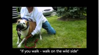A-1 Michigan Dog Training - Dog Whisperer Big Chuck Mcbride