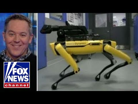 Gutfeld on robot dog