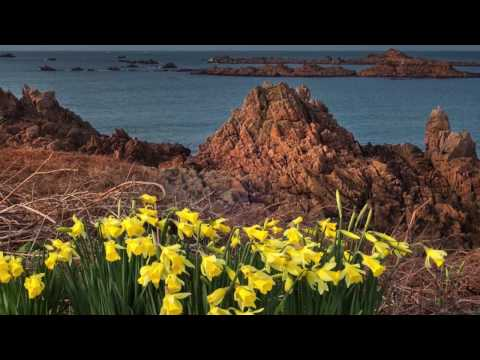 Floral Guernsey HD 1080p