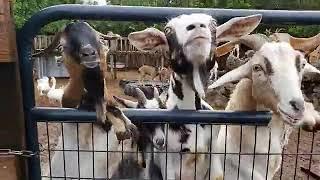 LaPorte Farms LIVE | 4-12-2021
