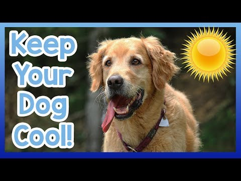 how-to-cool-your-dog-down-in-summer!-tips-on-how-to-keep-your-dog-cool-in-hot-weather!-dog-health!