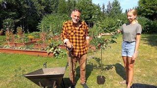Jak i kiedy posadzić drzewa owocowe?
