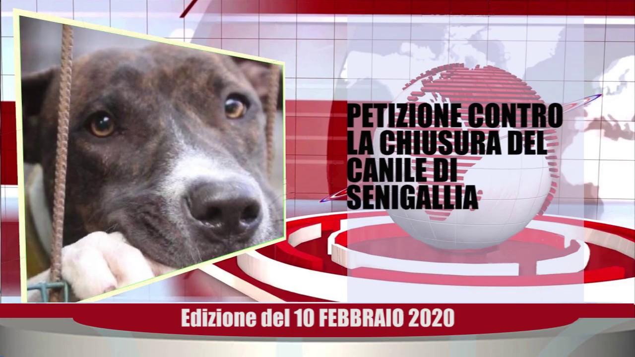 Velluto Senigallia Tg Web del 10 02 2020