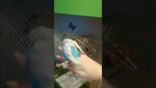 Секс попугая с человеком