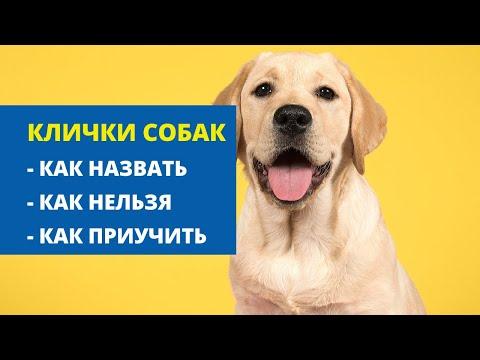 Клички собак. Как назвать щенка? Как приучить щенка к кличке?