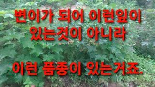 임산물 재배 좋은순 1…