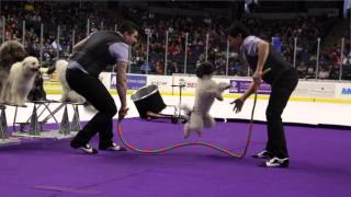 Olate Dogs Intermission Show 3/22/15 - Winners Of America's Got Talent