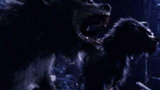 Werewolf, Baby! : Rob Zombie