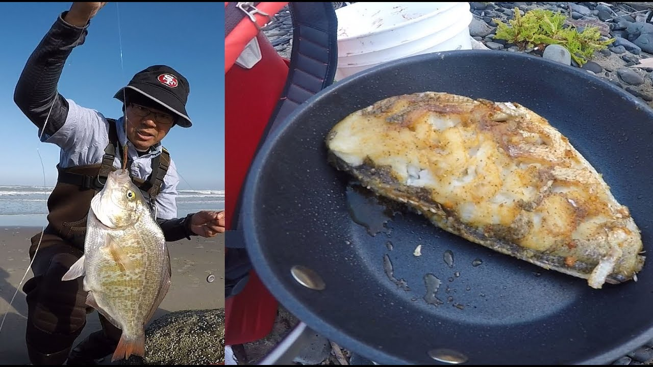 Catch and cook surf perch oregon coast surf fishing for Surf perch fishing oregon