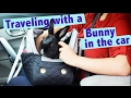 How To Travel With Your Bunny in the Car