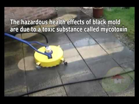 the-proper-manner-to-kill-mildew-with-bleach,-borax,-vinegar-in-rogerson-id---moldremoval.com