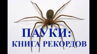 Пауки Гиганты в Коллекции Природоведческого Музея, Киев, Украина