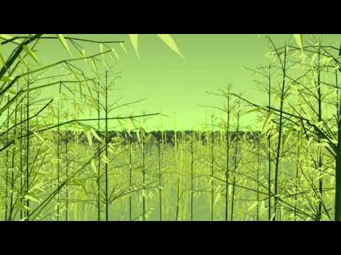 Bamboo - the Wise Man's Timber