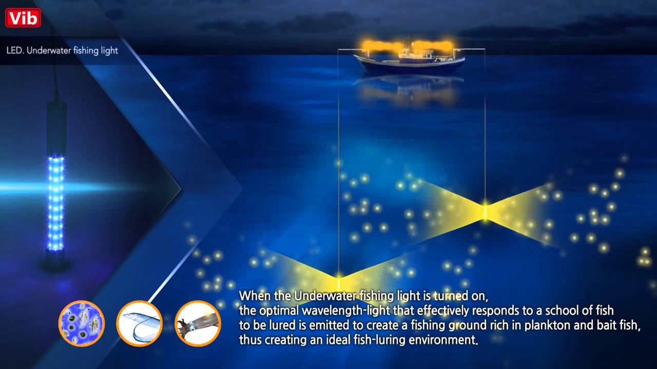 A vib led underwater fishing light youtube for Underwater fishing light