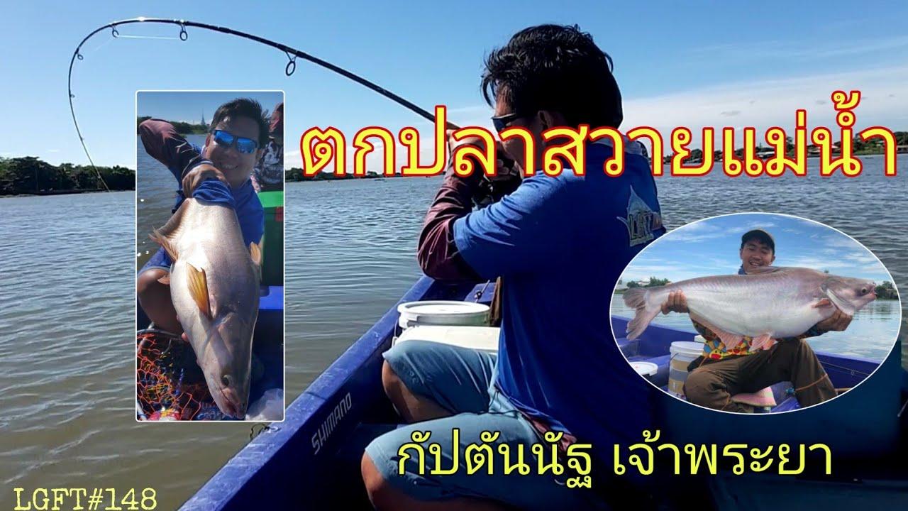 ลงเรือตกปลาสวาย แม่น้ำเจ้าพระยา ไต๋กัปตันณัฐ LGFT#148