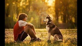 Что нужно знать, перед тем как завести собаку?