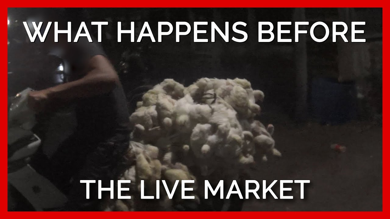 Animals Go Through Hell Before Reaching Live Animal Markets Where They're Slaughtered #shorts