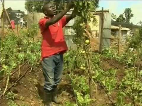 Paul Ndiho Kenyan Organic Farm