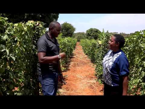 Passion Fruits Farming with Yad Bio-vitaliser Part 1