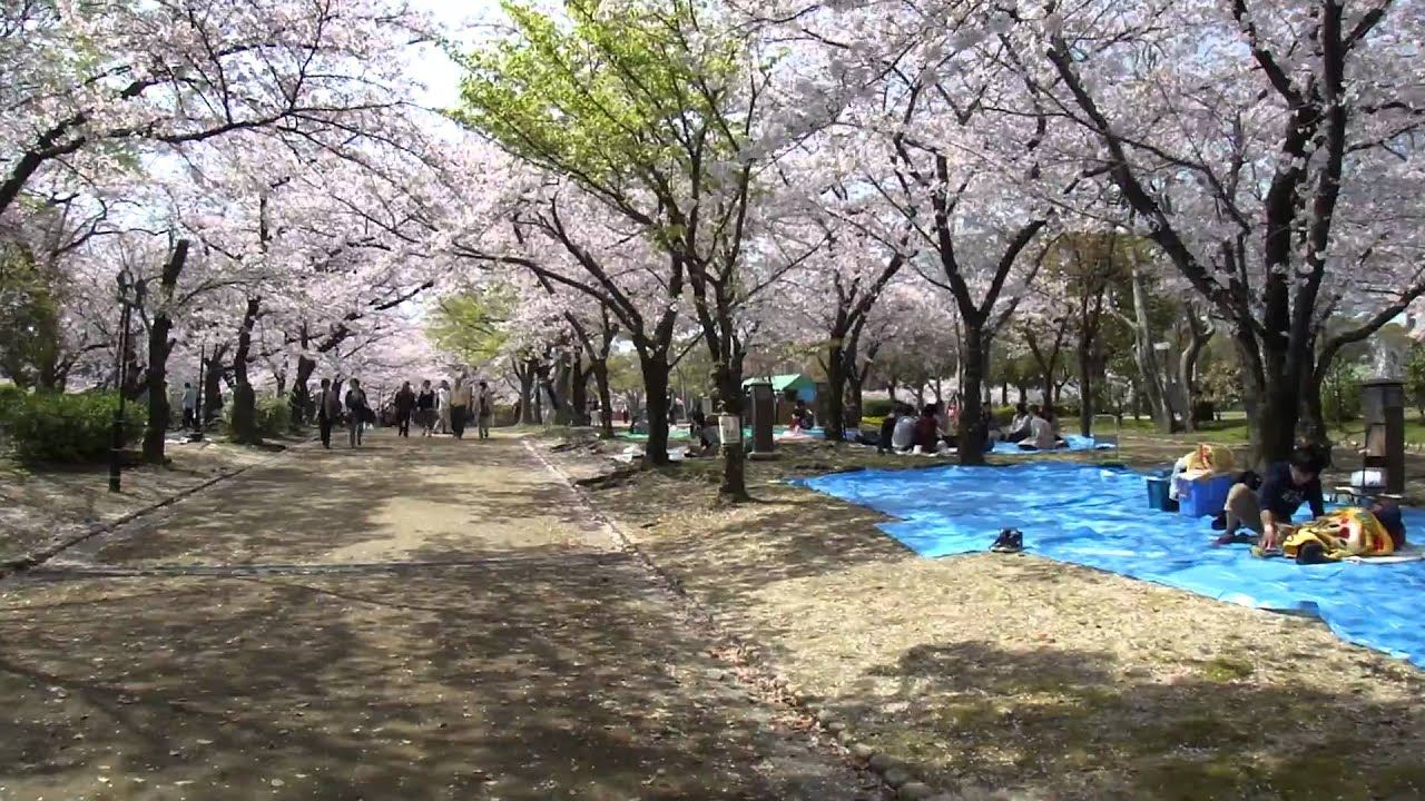 Cherry Blossoms in Nishinomaru Garden of Osaka Castle 2011/04/10