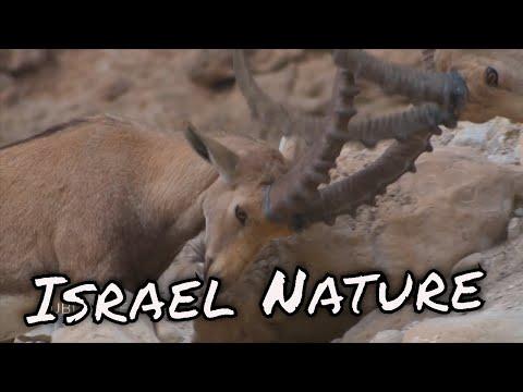 Israel Nature In Motion / الحياة البرية في فلسطين
