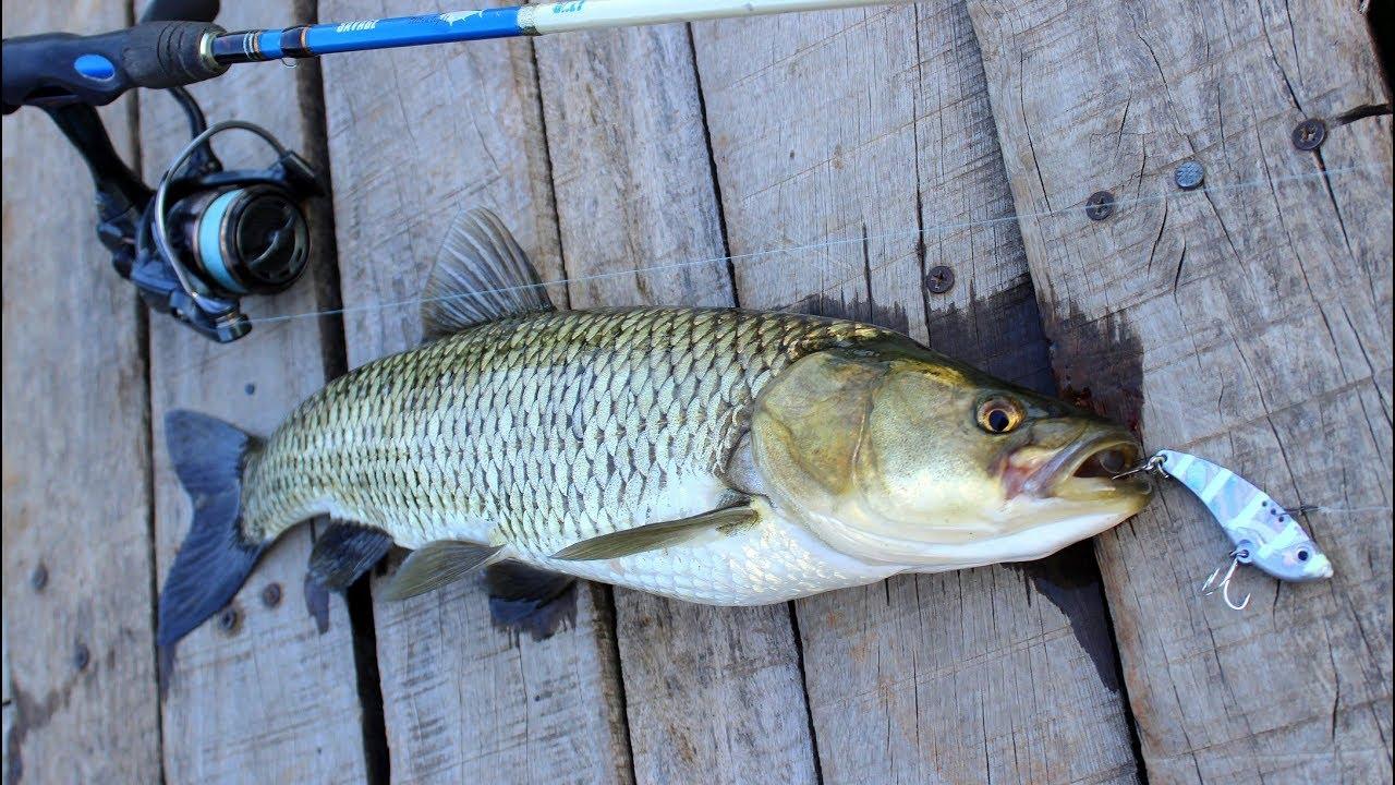 En Kolay Ve Keyifli Balık Tutma Şekli / Toros Kefali Avı ( Çekiliş )