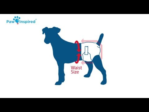How to Put on a Dog Diaper and Choose the Right Size?