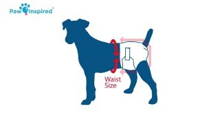 Will Not Fall Off Pink Small 1 XLL Created By A Veterinarian Specifically to Fit Your Dog NO SLIP- Dog Diaper Keeper Sizes: S