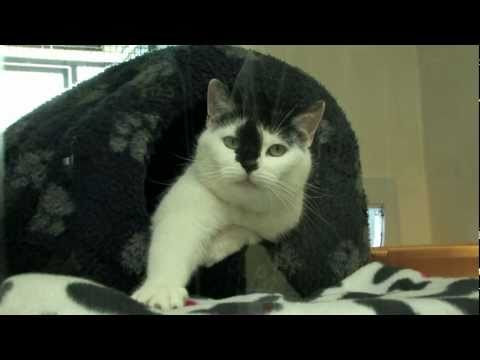 CATS PROTECTION ADOPTION CENTER - DOCUMENTARY