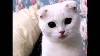 20 самых милых кошек интернета (фото)