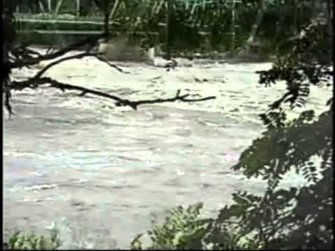 A Lumbermans Near Drowning