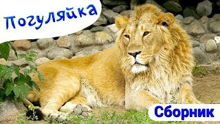 Поиграйка - Сборник - Все серии про Зоопарк - Погуляйка с Зоопарке thumbnail