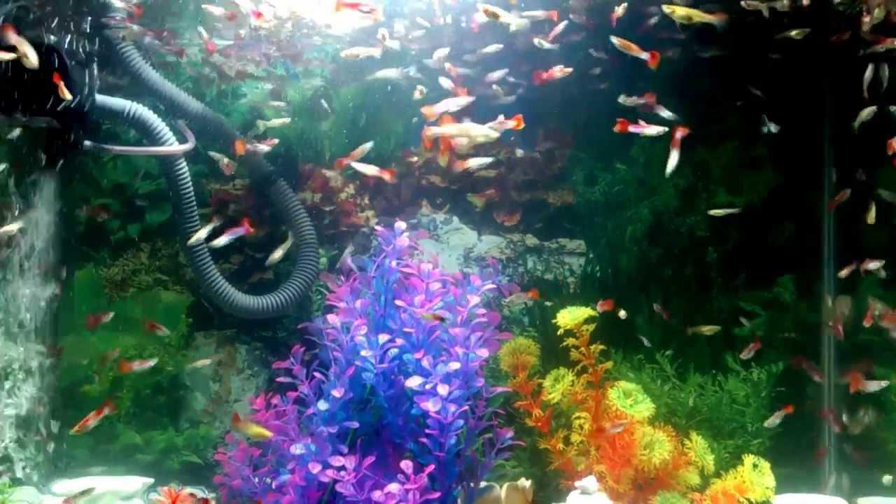 Freshwater Aquarium Fish   YouTube