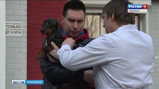 В Смоленске стартовала бесплатная вакцинация домашних животных