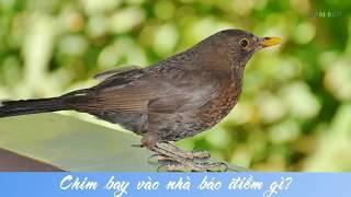 Chim bay vào nhà báo điềm gì tốt hay xấu