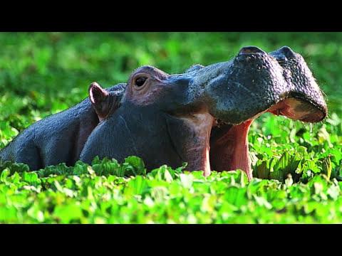ТОП 10 Самые опасные животные в мире.  Страшные дикие животные