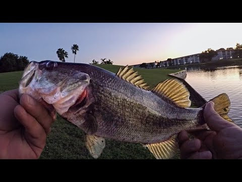 INCREDIBLE Shoreline Pond Bass Fishing In Florida (7 BITE FLURRY & INSANE NUMBERS!!!)