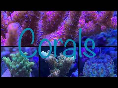 Korallen Update - Red Sea Reefer Peninsula 650 / PH-Wert Entwicklung