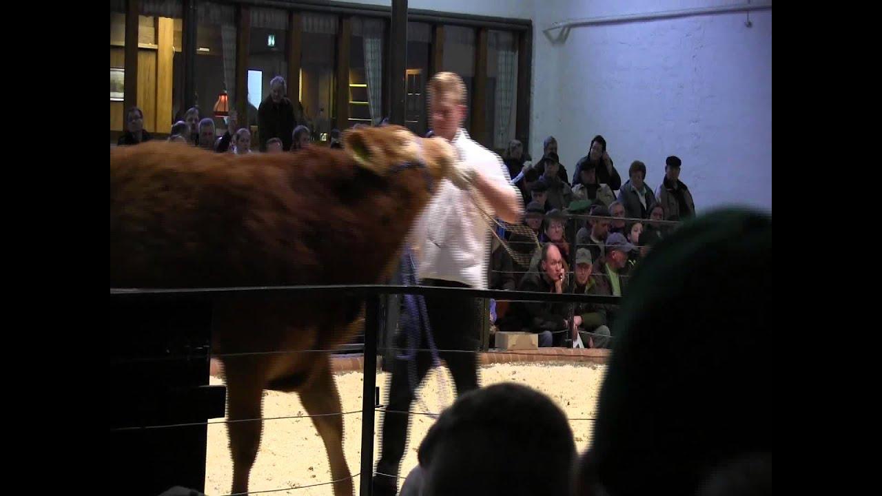 CATTLE.de: 3. Polled Limousin Sale RSH 074