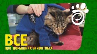 Одежда Для Котов. Все О Домашних Животных