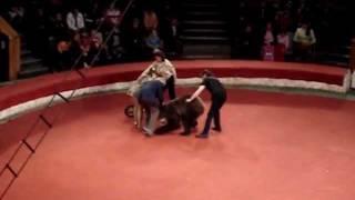 Трагедия в Цирке! Медведь Напал на Человека!